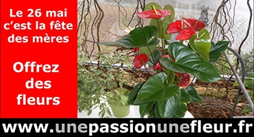 pub-passion-fleur